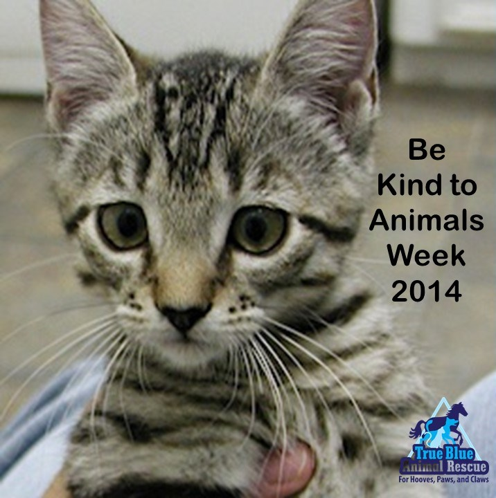 Be Kind To Animals Week 2014