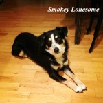 True Blue Animal Rescue Smokey Lonesome