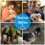True Blue Animal Rescue Success Stories December 3, 2014