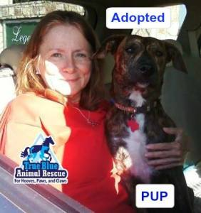 Pup_TBAR Success Story _ True Blue Animal Rescue Texas Brenham