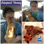 Success Story Wednesday True Blue Animal Rescue Dog Adopted Honey
