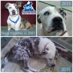 Throwback Thursday Success Story True Blue Animal Rescue Texas Sinatra aka Baby