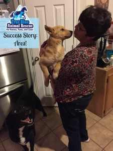 True Blue Animal Rescue Texas Success Story Ares