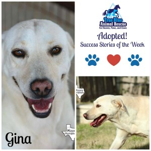 True Blue Animal Rescue Success Story Gina