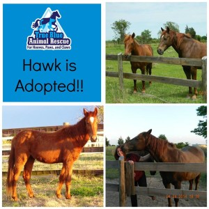 True-Blue-Animal-Rescue-Texas-Success-Horse-Hawk