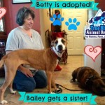 TBAR-Adopted-Dog-Betty