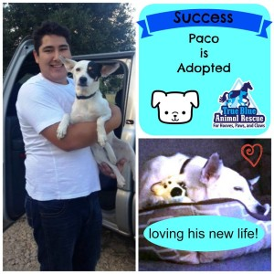 TBAR-Adopted-Dog-Paco