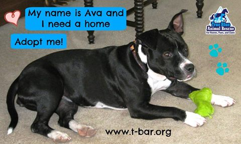TBAR-Pet-of-the-week-Ava