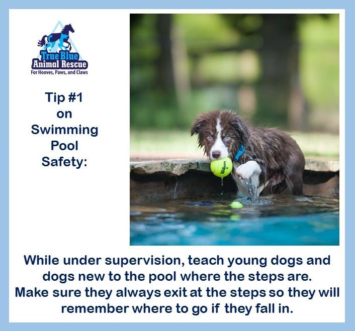TBAR-Swimming-Safety-1