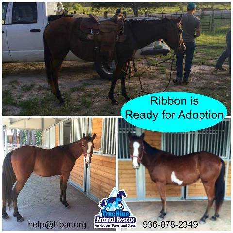 TBAR-Adoptable-Horse-Ribbon