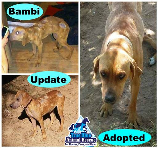 TBAR-Adopted-Bambi-Dog