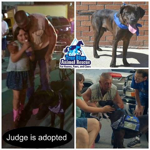 TBAR-Adopted-Dog-Judge