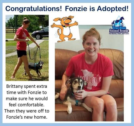 TBAR-Adopted-Fonzie-Dog